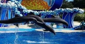 SeaWorld bietet den Zuschauern atemberaubende Tiershows.