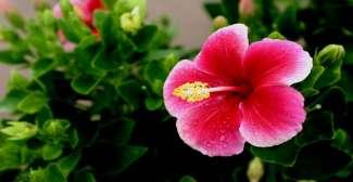 Auf Hawaii gibt es wunderschöne Blumenarten.