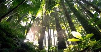 Saftig grüne Regenwälder