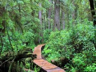 Vancouver Island Rainforest