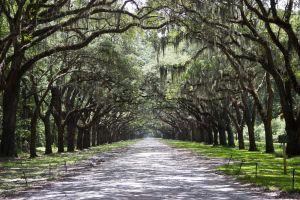Wormsloe Historic Site, Savannah