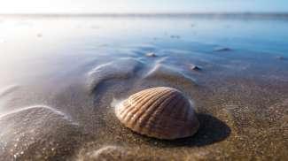 Schöne Muscheln finden Sie z.B. in Siesta Key oder Sanibel Island.