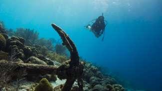 Wie wäre es mit einem Tauchkurs, um die Unterwasserwelt zu erkunden?