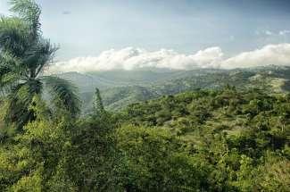 Dominikanische Republik - Regenwald