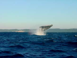 Von Reykjavik aus können Sie eine unvergessliche Walbeobachtungstour buchen.
